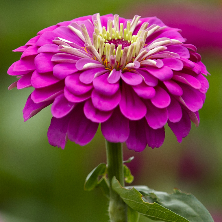 Stock photo of pink flower
